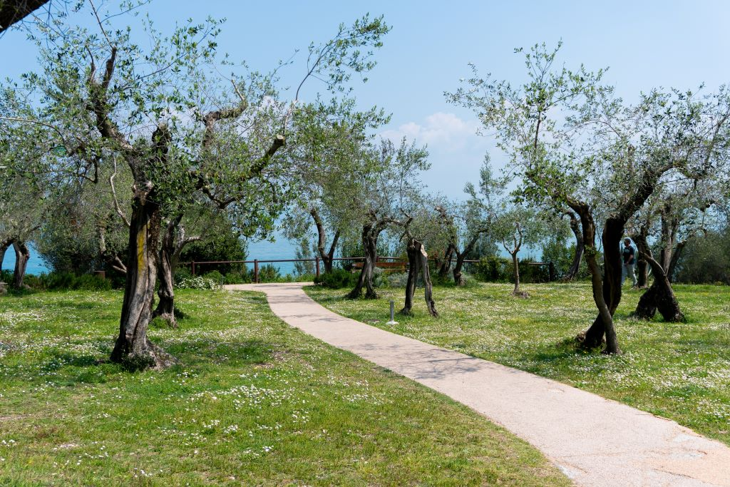 olive grove enviroment & natural biodiversity