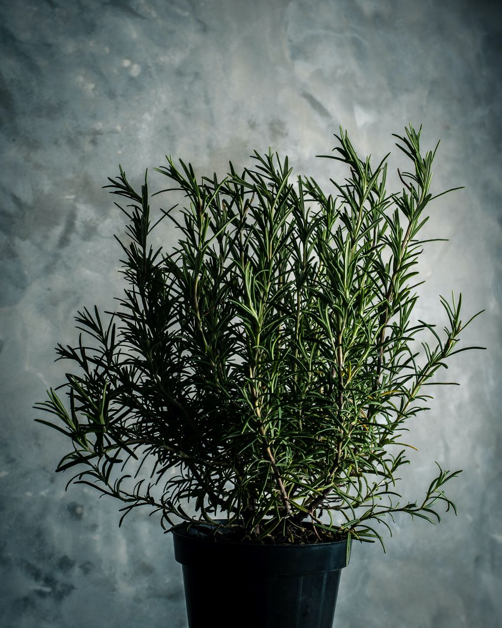 A new gourmet olive oil for 2020 Rosemary