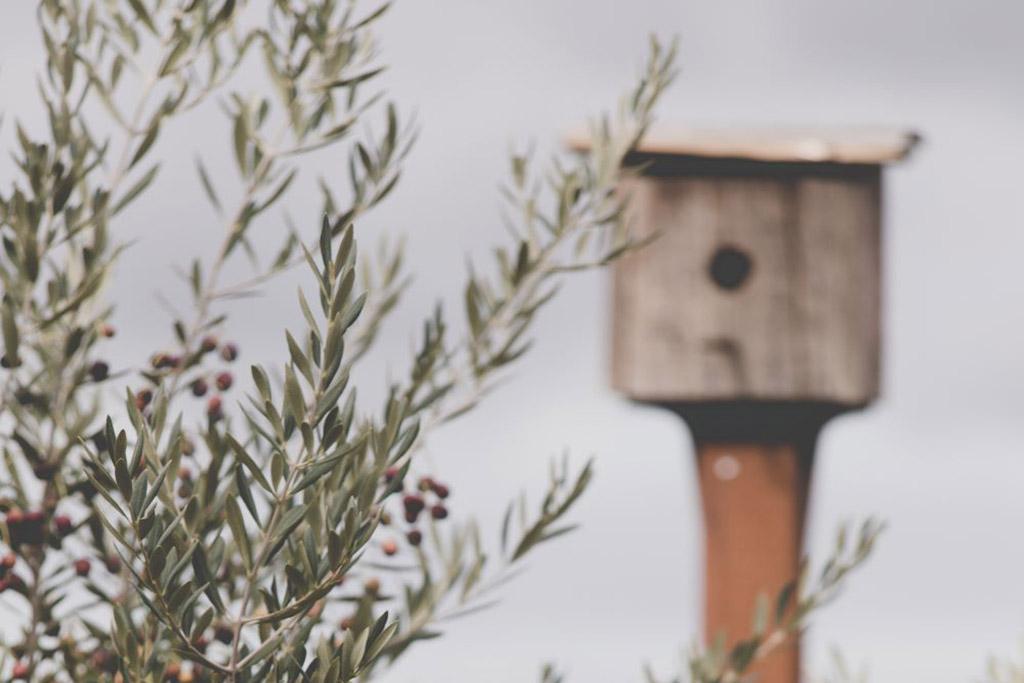 Mavroudis-olive-harvest-and-olive-oil-pressing